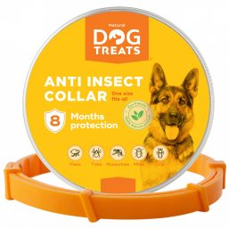 Dog insect collar
